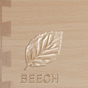 beech1