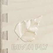 birch1